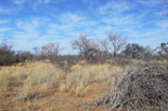 Hunting area example photo