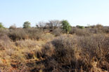 Bushveld hunting area
