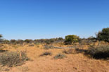 Cruiser Safaris hunting area