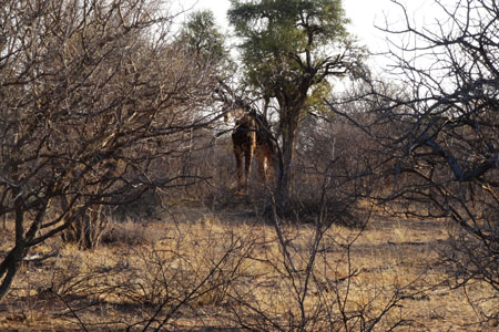 Cruiser Safaris Hunting Client Newsletter